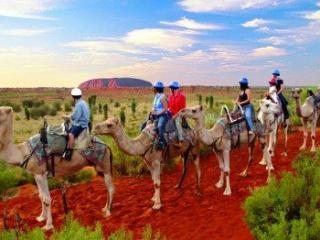 Camel Tour at Uluru, Ayers Rock