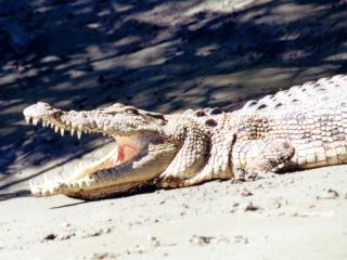 Croc - Clarry