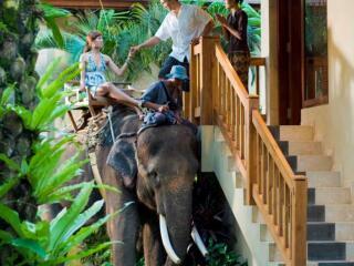 Elephant Chauffeur Service