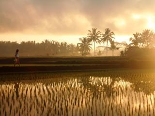 Rice Paddy Tour
