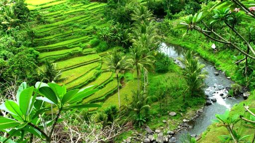 Ubud Valley View