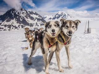 Doggie Sled Alaska.PNG
