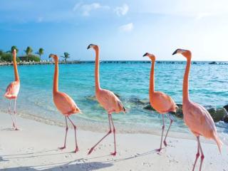 Flamingos Caribbean