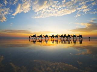 Camels at sunset on Cable Beach, Broome - Lauren Bath