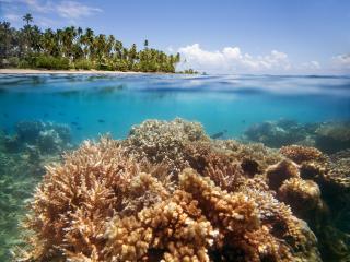 Jean-Michel Cousteau Resort Fiji Reef