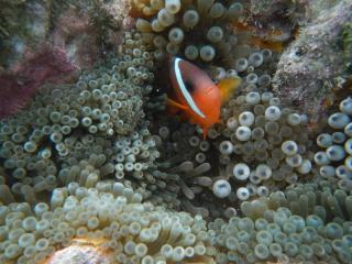 Tivua island Cruise - Reef