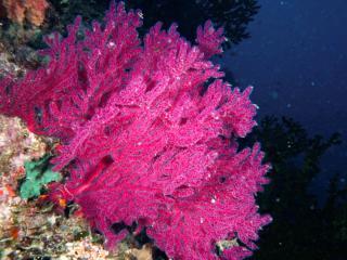 Paradise Taveuni Scuba Diving