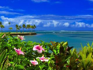 Naviti Resort, Fiji Coral Coast