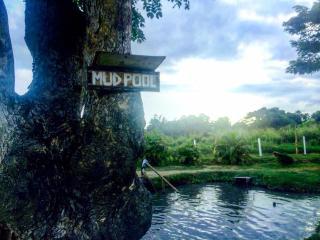 Hot Springs Thermal Mud Pool Tour