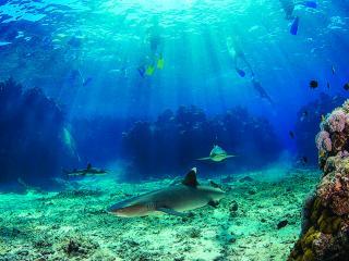 Barefoot Kuata Island Cruise - Shark Snorkel