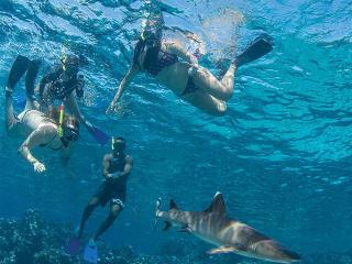 Barefoot Kuata Island Cruise - - Shark Snorkel