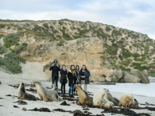 Kangaroo Island - Seals