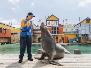 Seal Guardians - Sea World
