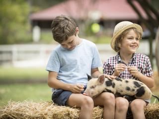 Paradise Country - Piglets