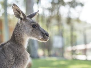 Paradise Country - Kangaroos