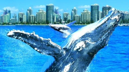 Whales in Paradise - Whale Watching Tour