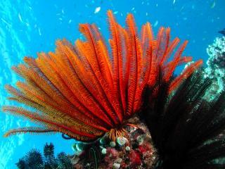 Coral at Moore Reef