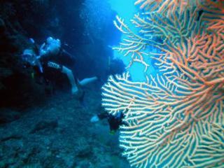 Split Bommie Diving
