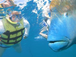 Green Island & Reef Tour - Maori Wrassi