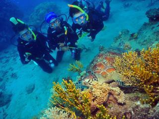 Green Island Cruises - Intro Dive