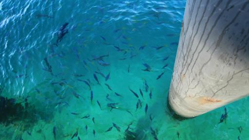 Green Island Cruises - Fish Feeding