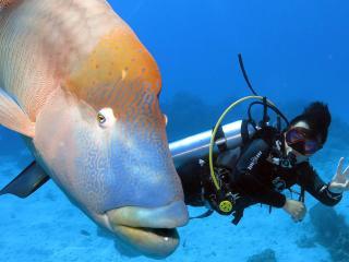 Reef Tour - Diving