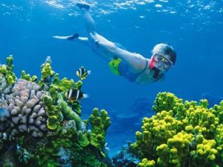Snorkel Explore Adventure
