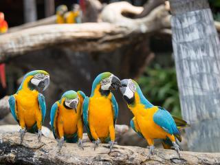 Macaw, Rainforest Zoo, Zoo, Rainforest