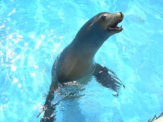 Seal, Sea Life, Sea Life Park Hawaii