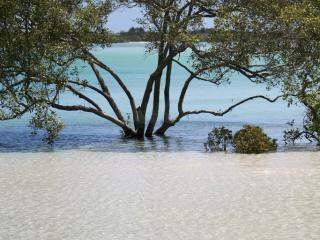 Fraser Island Mangroves