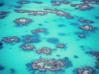 Heron Island Reef