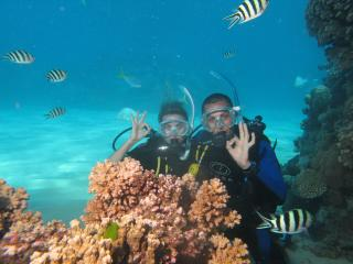 Hamilton Island Diving
