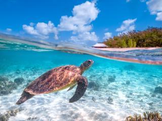 Heron Island Turtle 3