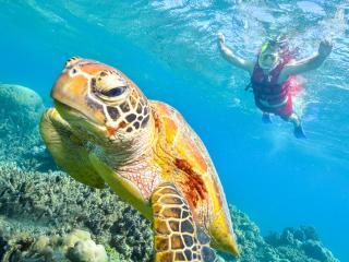 Arlington Reef - Snorkelling