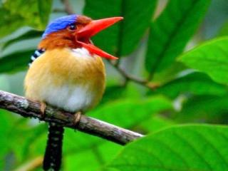 Bird Watching Langkawi