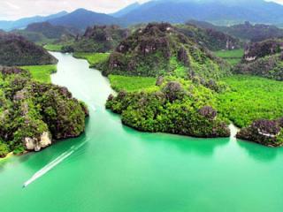 Langkawi Mangrove Ecosystem