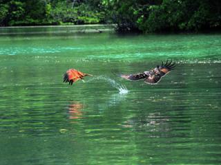 Langkawi Eagles