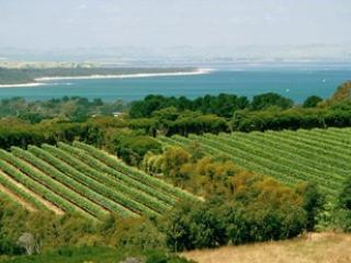 Stoniers Winery