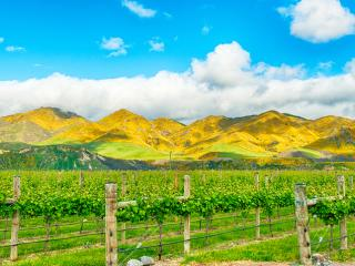 Marlborough Vineyards & Mountains