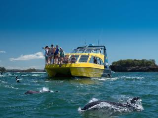 Dolphin Nature Cruise