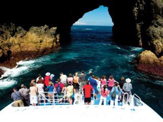 Discover the Bay Including Cape Brett & Waitangi