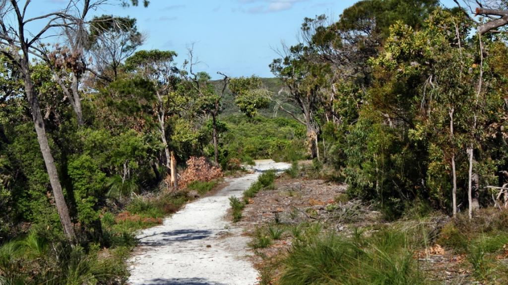 Forest Way - Noosa Heads National Park