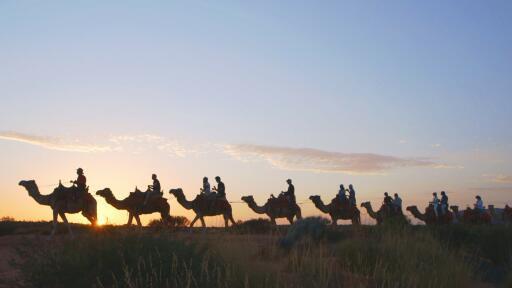 Camel to Sunrise - Tourism Australia - The Precinct