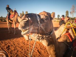 Camel to Sunrise - Tourism NT - Matt Glastonbury