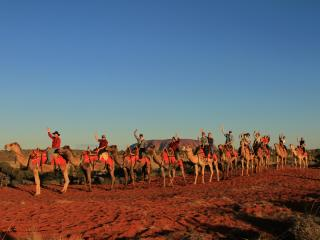 Sunrise Camel Tour