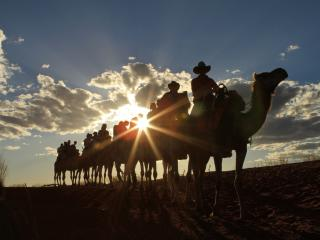 Sunset Camel Tour