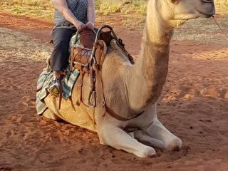 Camel Farm - Optional Tour