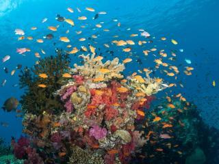 Diving Rainbow Reef