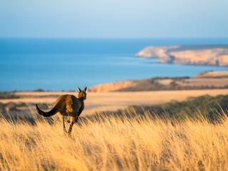 Kangaroo Island, Ben Goode