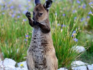 Kangaroo Island Road to Recovery Tour